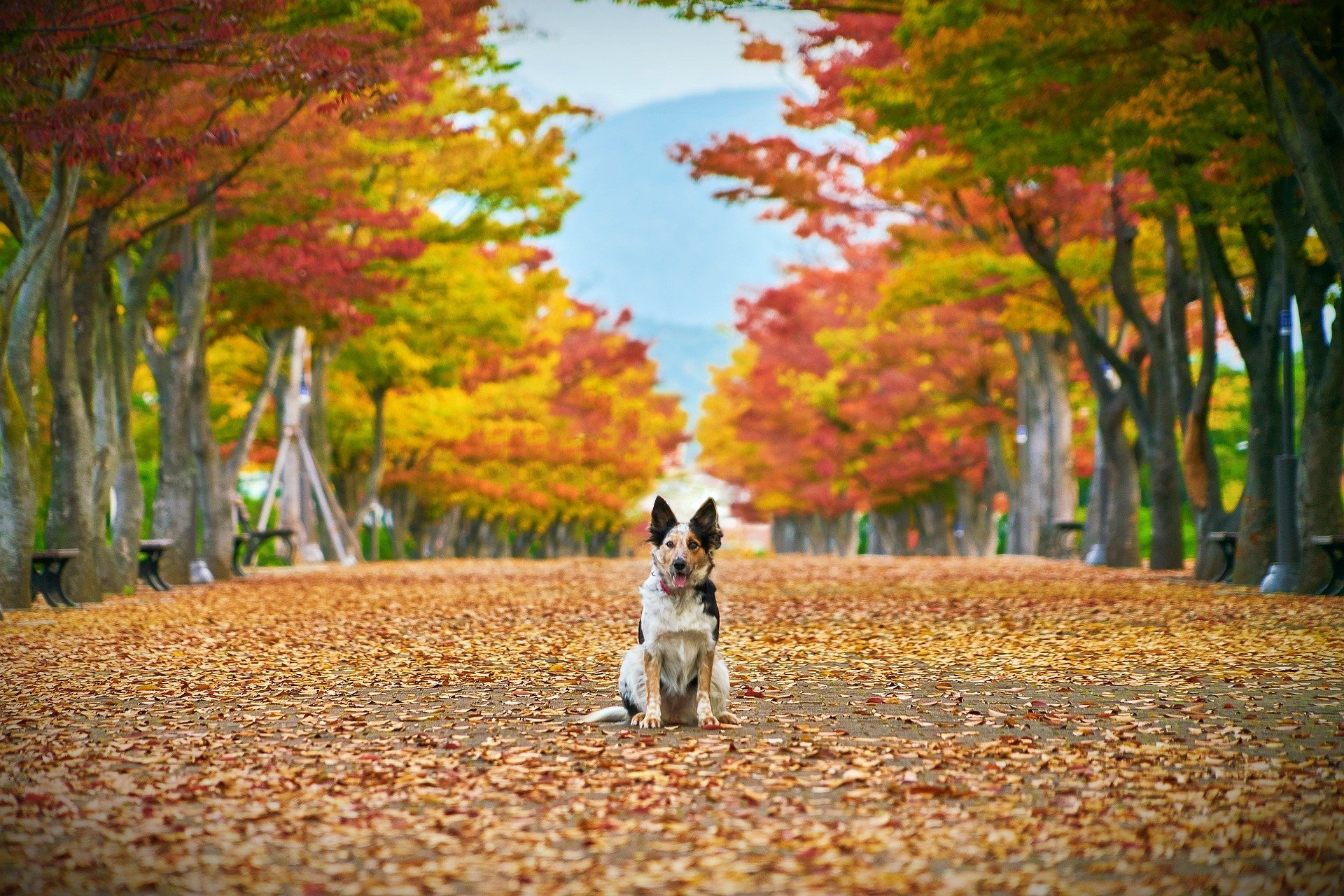 Blue Ash,Ohio Dog and Cat Supplies and Supplements