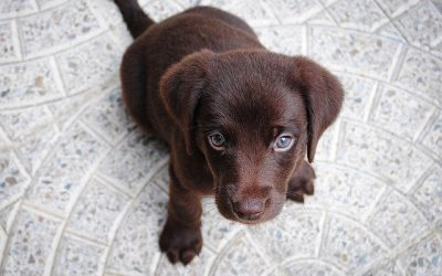 First Time Dog Parent?  Here are Ten Tips to help the transition for both you and your pup.